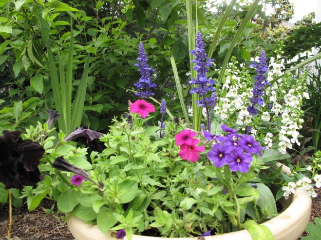 Container with Angelonia, Salvia, Phlox and Petunia
