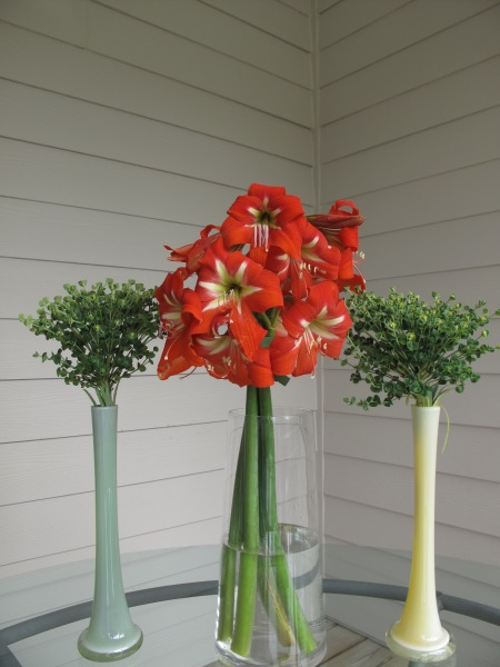Hippeastrum Flanked By Euphorbia 'Shorty'. (Perhaps a cleaner design without the Paeonia 'Festiva Maxima'.)