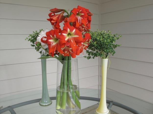 Hippeastrum, Paeonia 'Festiva Maxima', Euphorbia 'Shorty'