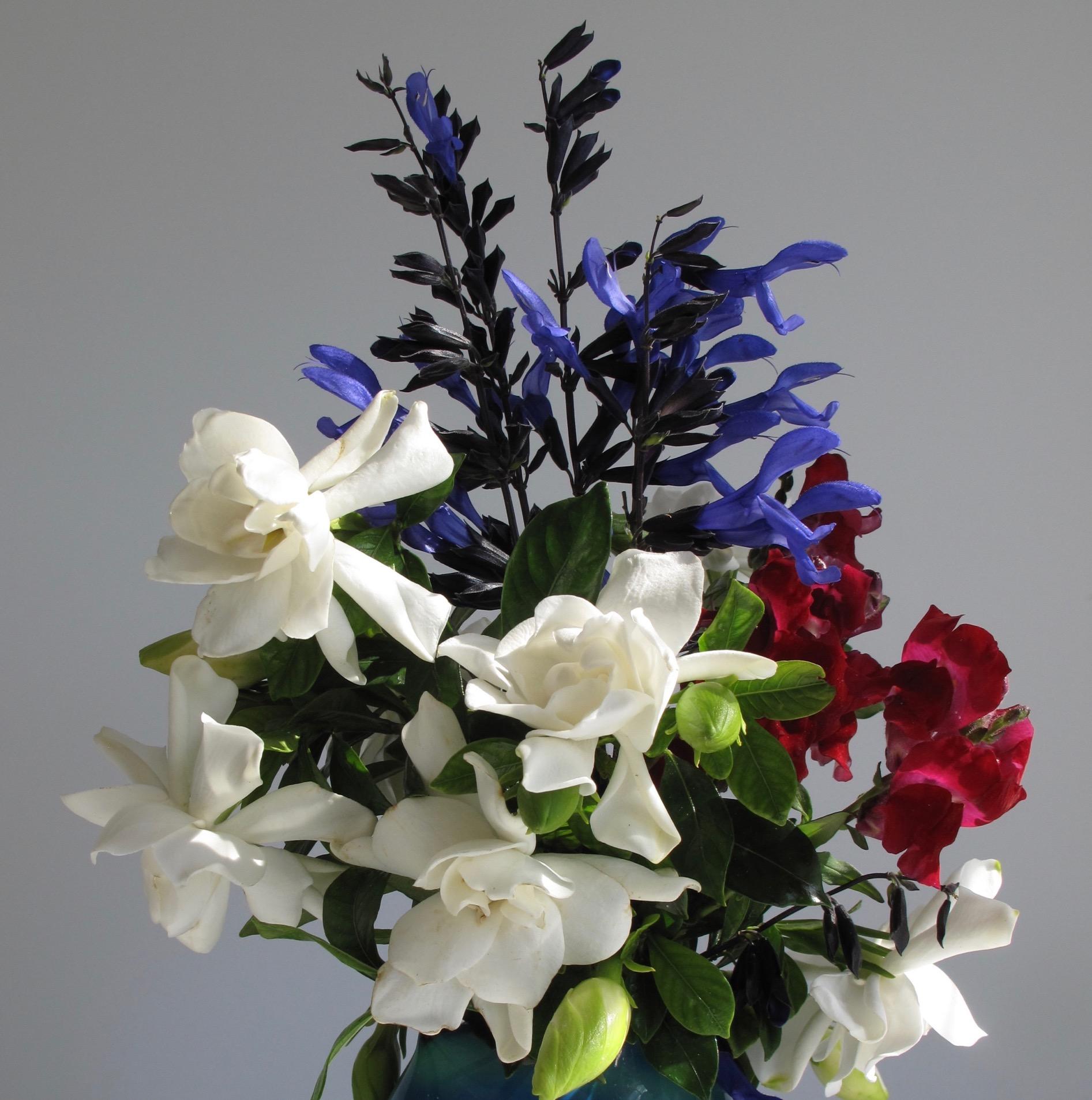gardenia   pbmGarden