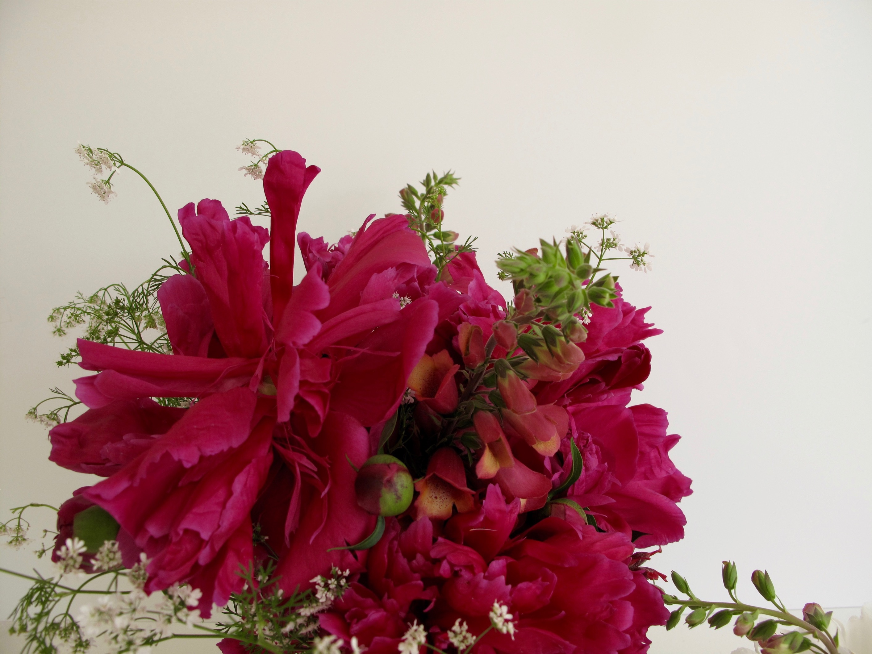 In A Vase On Monday Cherished Red Pbmgarden