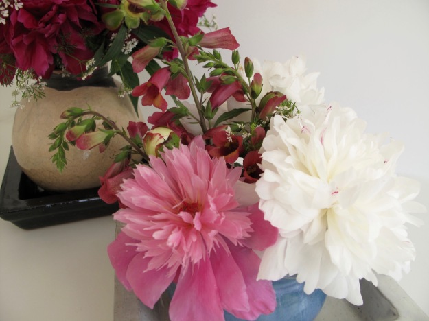 Pink and white peonies and foxglove grown in pbmGarden