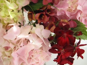 Hydrangea macrophylla, Digitalis Foxlight 'Ruby Glow' and red Pelargonium