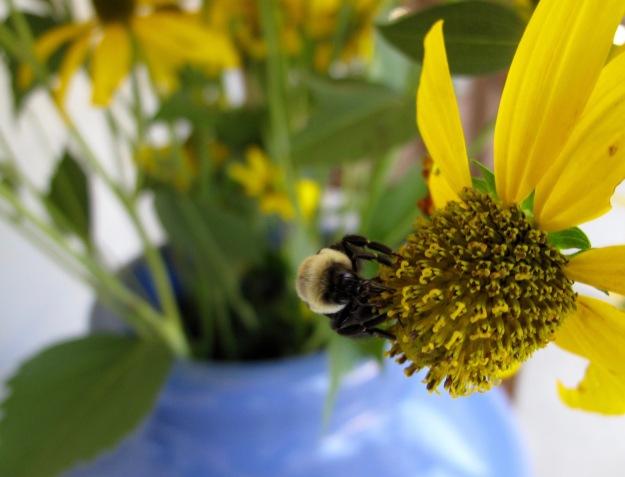 Bee and Rudbeckia laciniata (Green-Headed Coneflower)