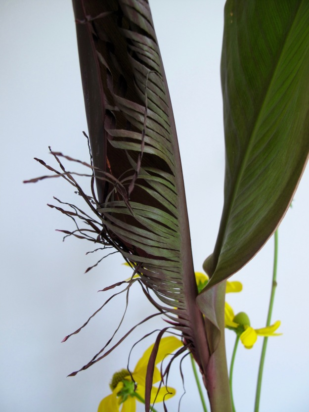 Canna Leaves, Fringed