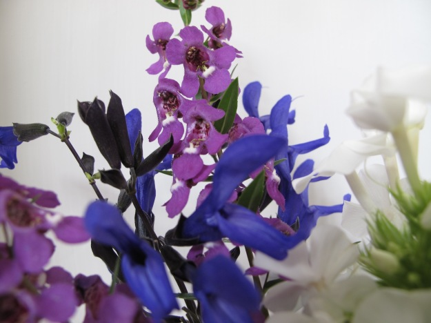 Salvia guaranitica 'Black and Blue' With Angelonia 'Serena Purple' and Phlox paniculata 'David'