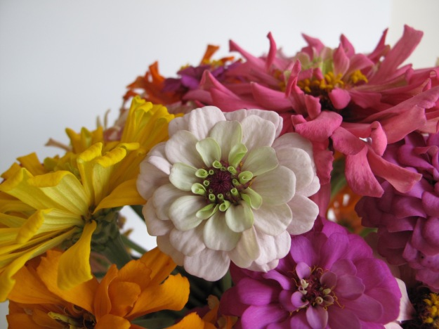 In A Vase On Monday - Summer Zinnias