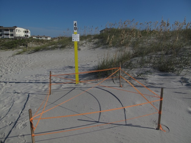 Sea Turtle Nest Number 49, Emerald Isle