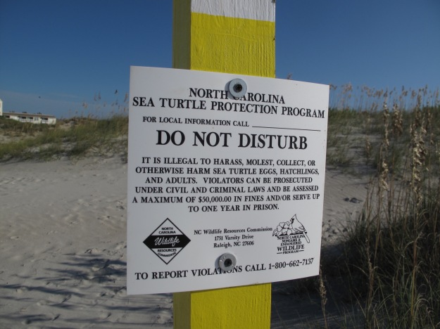 Sea Turtle Protection