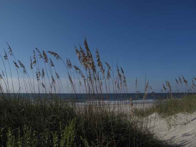 Uniola paniculata (sea oats) at Emerald Isle
