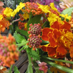 Lantana and Marigold