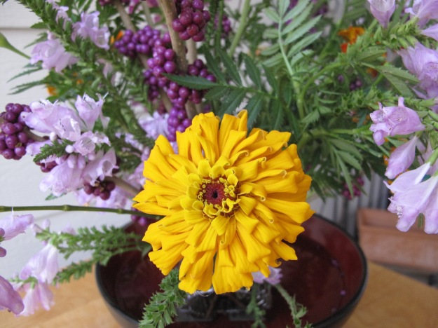 Obedient Plant, American Beautyberry, Zinnia, Marigold