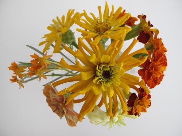 Asclepias Overhead View - Asclepias tuberosa, Zinnia, Marigold, Zinnia, Marigold