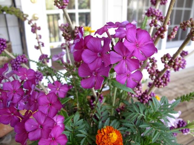 Phlox paniculata 'Nicky,' American Beautyberry, Marigold