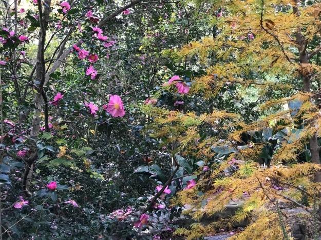 Asiatic Arboretum, Duke Gardens