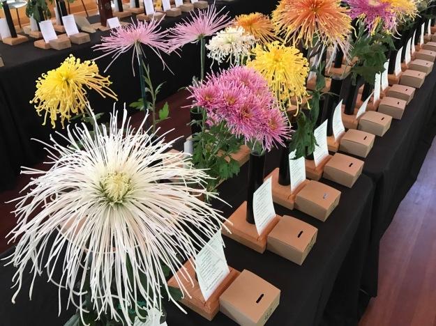 Chrysanthemum Show At Duke Gardens