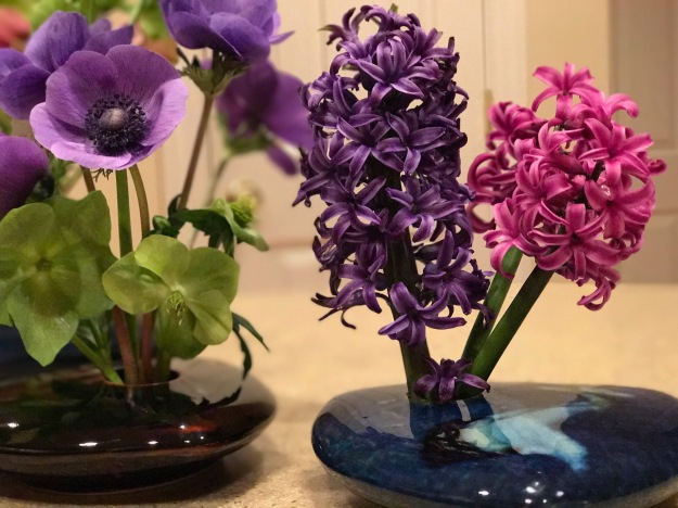 Hyacinth orientalis 'Blue Jacket' and 'Woodstock'