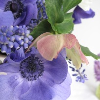 Anemone, Muscari, Hellebore