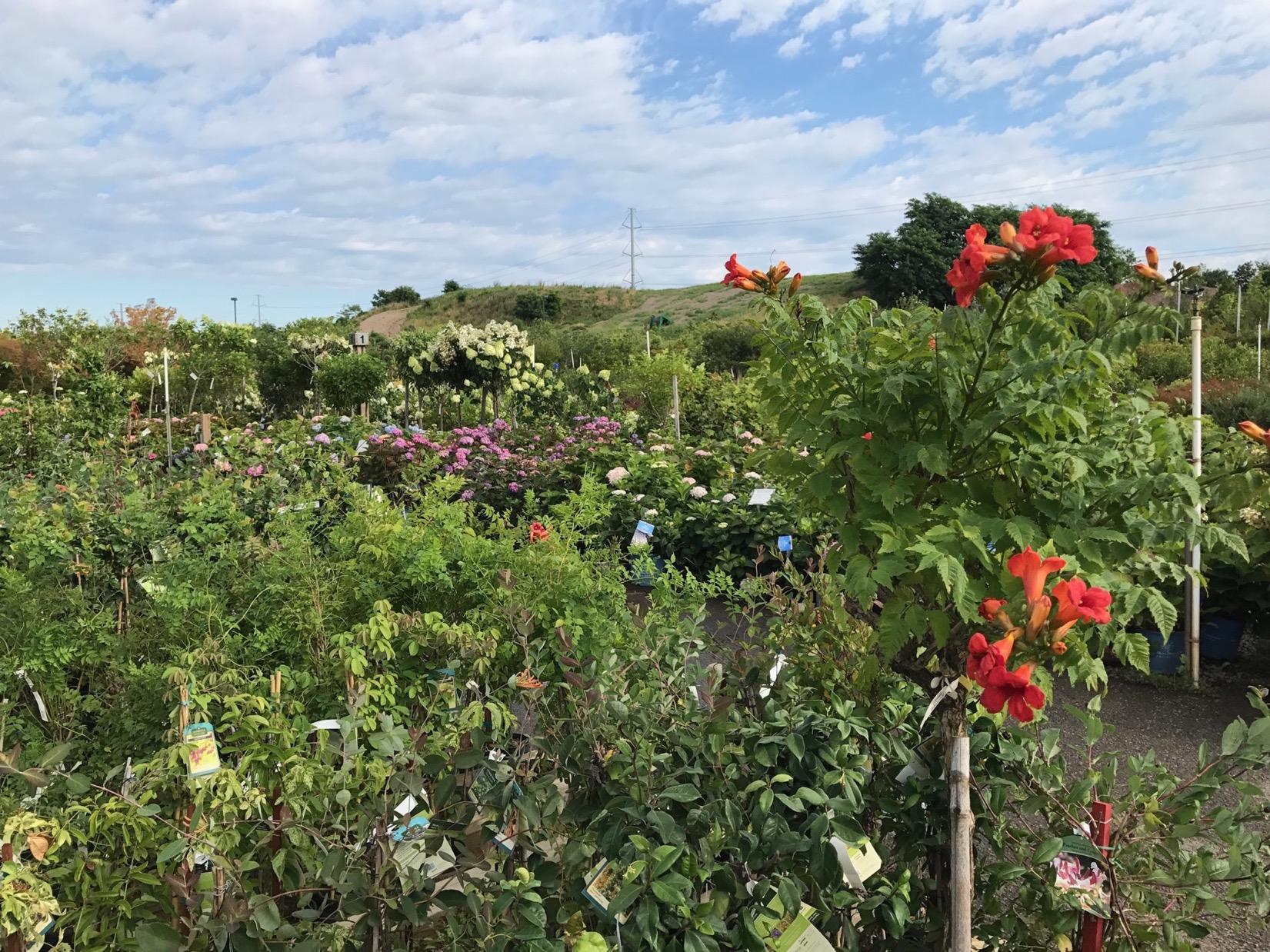 Charmant Merrifield Garden Centeru20142017 Garden Bloggers Fling