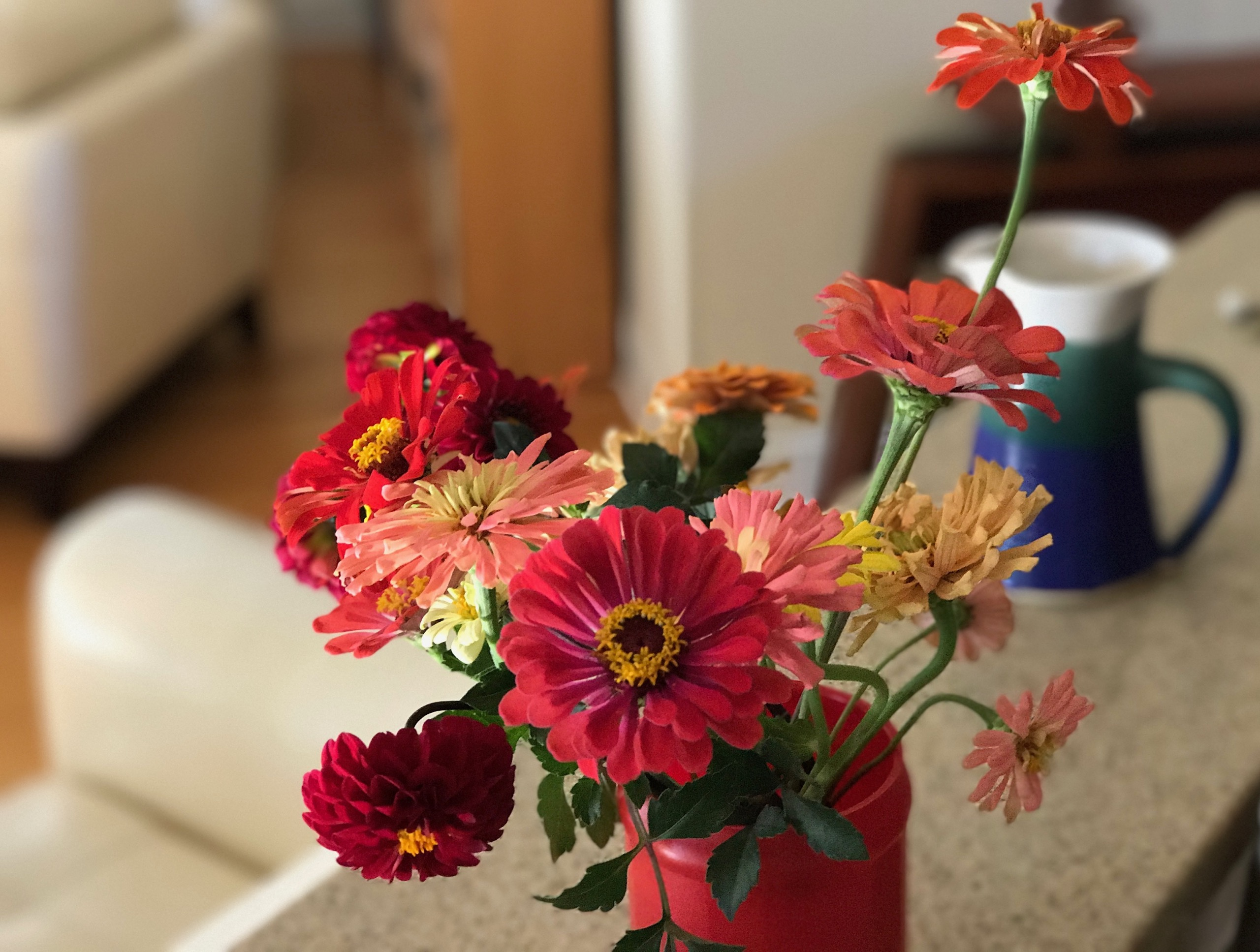 In A Vase On Monday – Sunlight And Color | pbmGarden