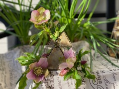 Hellebores and Brass -February 3, 2020