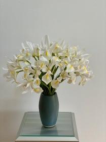 Iris In White -March 30, 2020